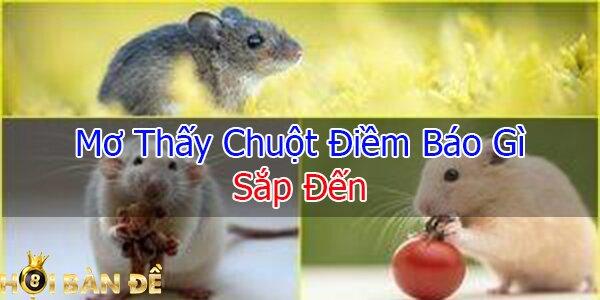 Mơ thấy chuột - Nằm mơ thấy chuột đánh số mấy chắc trúng?