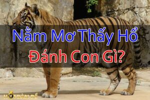 Nam-Mo-Thay-Ho-Danh-Con-Gi-Mo-Thay-Cop