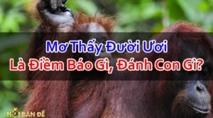 Nam-Mo-Thay-Con-Duoi-Uoi-Danh-So-May-Co-Phai-Hung-Tin